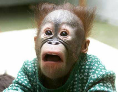 geschrokken aapje